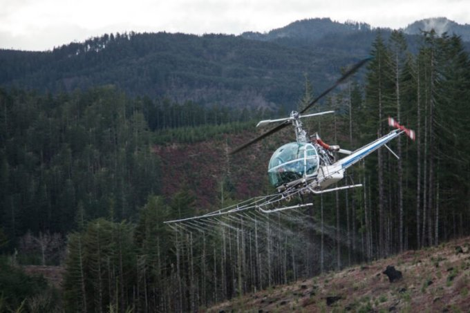 A helicopter sprays water over a recently logged slope owned by Starker Forests, near Philomath, Oregon, during a demonstration in 2015. (Alan Sylvestre / OPB)