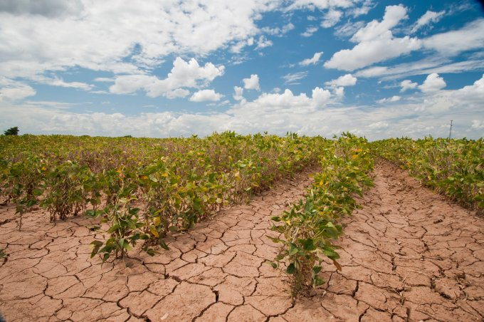 Soybeans show the effects of a 2013 drought in Texas in this USDA file photo. Government officials said Tuesday that Western states, including Arizona, remain locked in the grip of a historically severe drought, with the past year being one of the driest in more than a century. (Photo by Bob Nichols/U.S. Department of Agriculture).