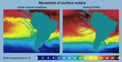 El calentamiento global podría influir de manera significativa en el fenómeno meteorológico de El Niño - Oscilación del Sur, de cuyos ciclos dependen muchos eventos, incluyendo inundaciones, sequías extremas, y el movimiento de aguas superficiales indicado en la ilustración. A la izquierda, movimiento de dichas aguas en la costa oeste de Sudamérica bajo condiciones normales. A la derecha, movimiento de las aguas durante un episodio de El Niño. (Imagen: NOAA)