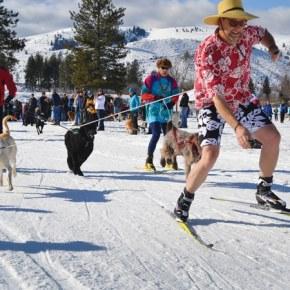 Doggie Dash makes its return