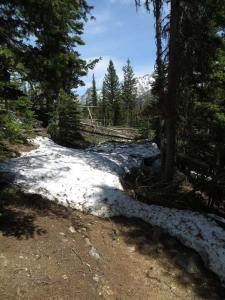 View from trail looking West near edge of avalanche. Photo courtesy USFS