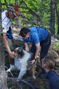 Jim Gregg and Vikki Buzzard reward Gregg's dog, Stout, after the dog found Aaryn Peterson during a training exercise. Photos by Laurelle Walsh