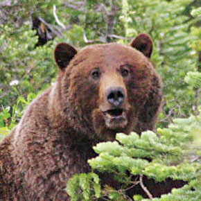 Information open house on proposed grizzly bear recovery