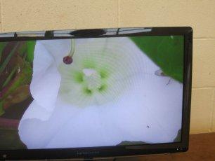 biodiversity-secret-life-of-bees-metns-nov-2013-009