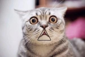 """Schermata 2018 11 06 alle 15.02.50 - Scoperto un """"triangolo"""" per stupire il professore all'esame, anche se hai studiato poco o niente."""