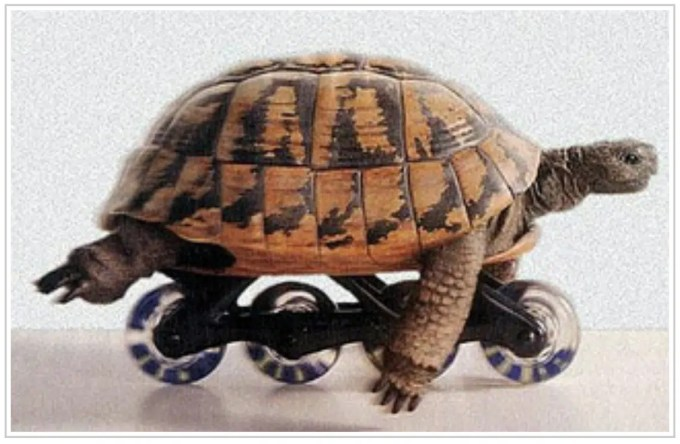 mappe mentali tartaruga rotelle