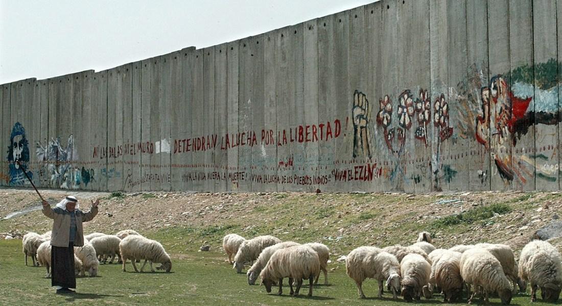 أين ترعى الماشية؟ سؤالٌ فلسطينيٌّ يحاصره الاستيطان