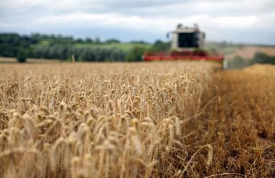 Što zapravo sadrže moderne žitarice?