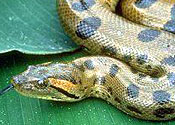 A snake: there are not any of these in East Horndon