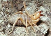 'Giant spider forced us out of our home'