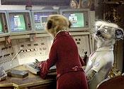 TV meerkat tops Katie Price and Lily Allen on Twitter