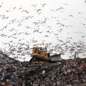 UK rubbish levels 'waste millions'