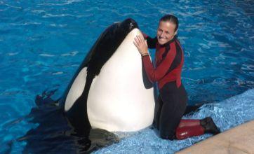 Killer Whale Tilikum attacks SeaWorld's Shamu show trainer