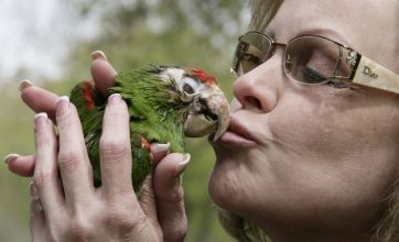 Pet parrot cost owner £50,000 in cancer treatment then dies
