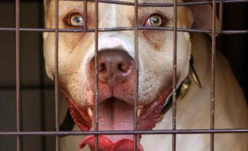 Dog owners facing tough regulations