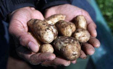 Jamie Oliver's young chefs get down and dirty with Jersey Royals