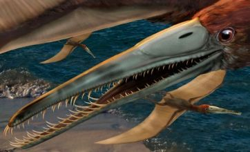 New species of flying dinosaur named after fossil discovery in Dallas