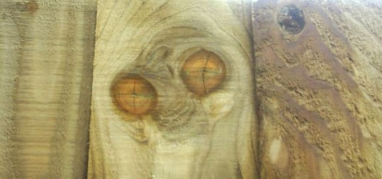 This remarkable image of the bug-faced alien appeared on a new fence panel