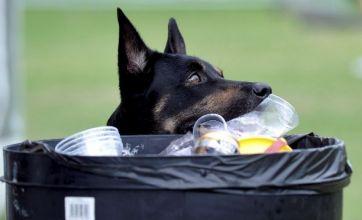Meet the dog who picks up rubbish