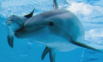 Bottlenose dolphin's birth went swimmingly