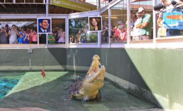 Harry the 'psychic' croc picks Australian PM to win