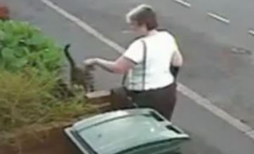 Mary Bale facing Facebook backlash after throwing cat in a bin