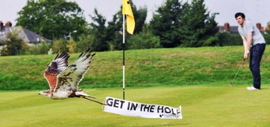 Watch the birdie: One of the mini banners to be flown across the Celtic Manor course