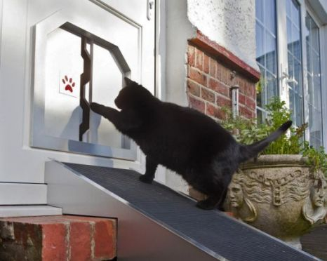 2 stone moggy Max tries out the flap for fat cats