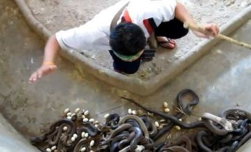 Man cleaning out cobra pit becomes YouTube sssensation