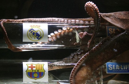 Iker the octopus