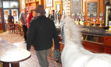 Horse walks into a bar… – Caption Competition