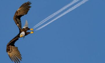 Introducing the jet-powered eagle