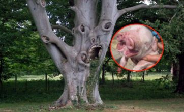 Pig with two snouts v scary screaming tree: Freak Out