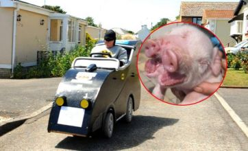 Pig with two snouts v Grandad Batmobile: Freak Out