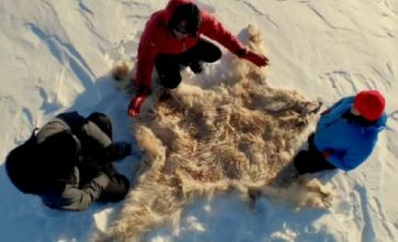 Polar Bear: Inside Nature's Giants Special was not for the faint-hearted