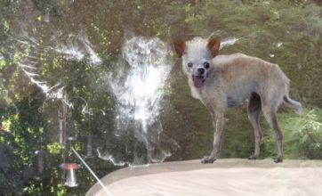 World's ugliest dog v owl 'having a headache': Freak Out