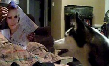 Meet the dog who's terrified of Julia Roberts