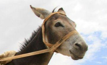 Man claims prostitute turned into donkey overnight