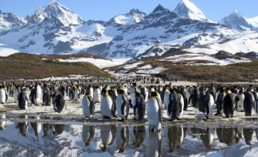 Frozen Planet's third episode lost the cute factor but remained cool
