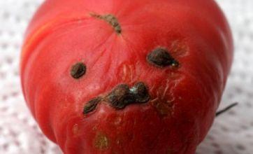 Gardener grows cherry tomato that looks like Adolf Hitler