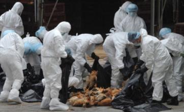 Man dies from bird flu in Chinese city of Shenzhen