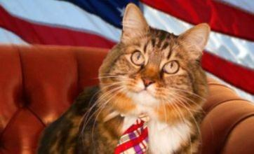 Hank the cat running for US Senate seat in Virginia