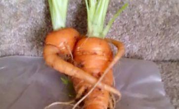 Cuddling carrots stun green-fingered grandmother