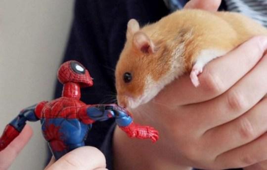 Hamster, magnet