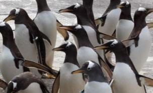 George Murray Levick was shocked by the sexual behaviour of the penguins (PA)
