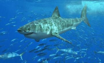 Surfer killed in latest shark attack off coast of Western Australia
