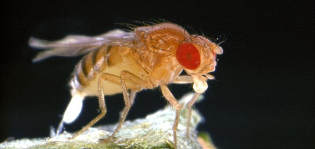 Weird nature fruit flies