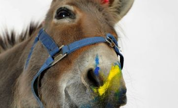 Patty the donkey likes to paint pictures one brushstroke at a time