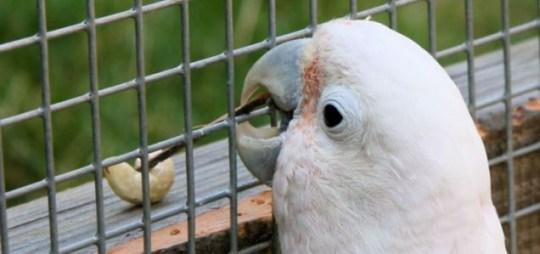 Bird using tools