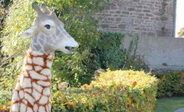 Good deed giraffe man says he likes to make others feel happy